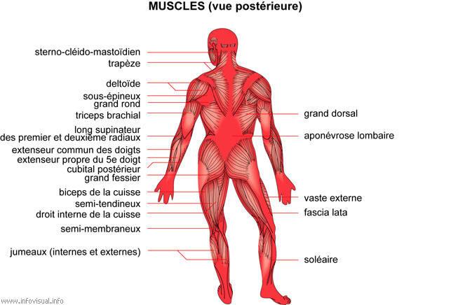 Que faire à osteokhondroze pour que lépine dorsale nétait pas malade